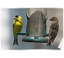 Mated Finches Poster