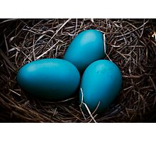 Robin eggs in Nest Photographic Print