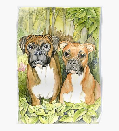 Boxer Dogs Poster