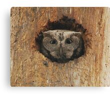 Hoot in a hole Canvas Print