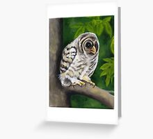 Baby Owl Greeting Card