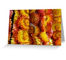 Harvesting Pollen from Everlasting Flowers Greeting Card