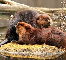 Beaverly love by Heather King