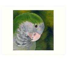 Quaker Parrot Art Print