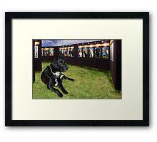 Dog Image Framed Print