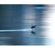 Duck in motion blur Photographic Print
