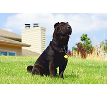 Special Shar Pei Photographic Print