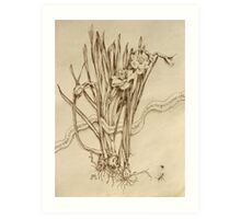 Narcissus and Echo - Walnut Ink Art Print