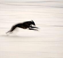 Fast Dog by Bill Crookston