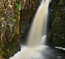 Holly Bush Spout, Ingleton Falls by Steve  Liptrot