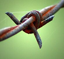 Barb Wire by Shawn  Wood