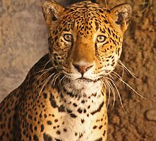 Leopard by eprather95