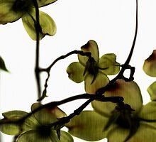 Blossoms by Andrea Barnett