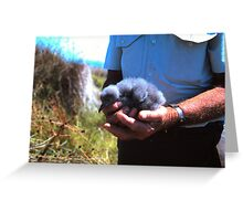 Baby Mutton Bird Greeting Card