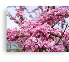 In Full Bloom Canvas Print