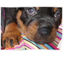 Rottweiler - Baby Face Poster