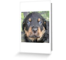 Beautiful Boy - Rottweiler Puppy Greeting Card