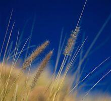 Grass by LeighTurner