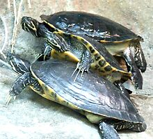 Turtle Stack by Paul Todd