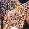 """Low Clearance"" Giraffe Wildlife Animal Watercolor by Paul Jackson"