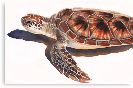 Sea Turtle Wildlife Watercolor Art  by Paul Jackson