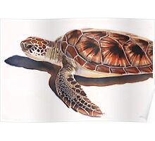 Sea Turtle Wildlife Watercolor Art  Poster