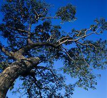 Tree by LeighTurner
