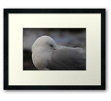 Seagull Resting Framed Print