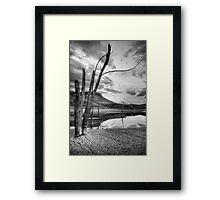 Seeking Revival Framed Print