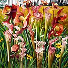 """Pitcher Plants"" Spring Flowers Watercolor  by Paul Jackson"