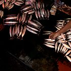 Fish And Hand, Sumatra, Indonesia. by Stewart Allen