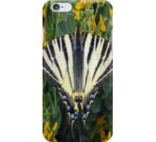 Scarce Swallowtail, Iphiclides Podalirius iPhone Case/Skin