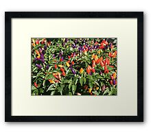 chilli chilli Framed Print