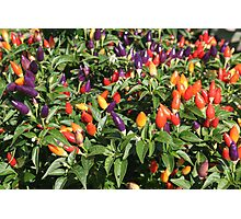 chilli chilli Photographic Print