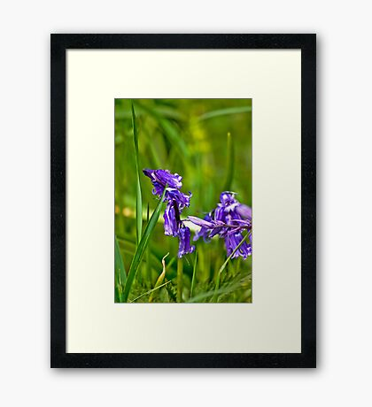 Wild Flowers - Bluebells Framed Print