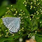 Blue/Grey by Robert Abraham