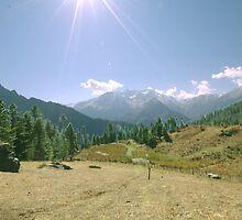 Magic Mountain Forest by junglejim1