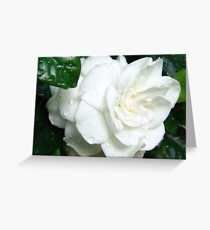 White Gardenia Greeting Card