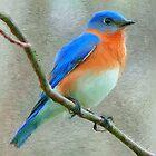 Bluebird Painting by jpgilmore
