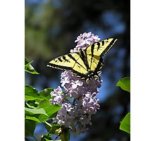 A Welcome Visitor ~ Photographic Print