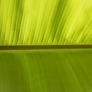 Banana Leaf  by Kristen Joy Tunney
