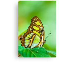 red lacewing butterfly Canvas Print