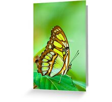 red lacewing butterfly Greeting Card