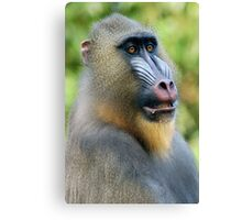 So Handsome Canvas Print