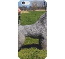 Fluffy Kerry Blue Terrier