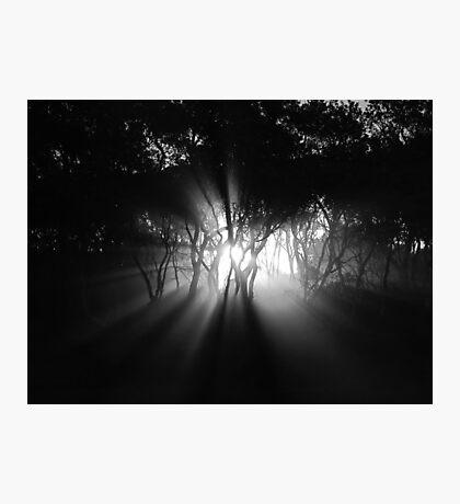 Creeping Photographic Print