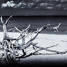 Deadwood by Jeff Blanchard