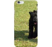 Special Kerry Blue Terrier iPhone Case/Skin
