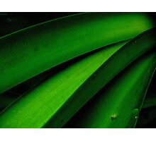Greener than Green Photographic Print