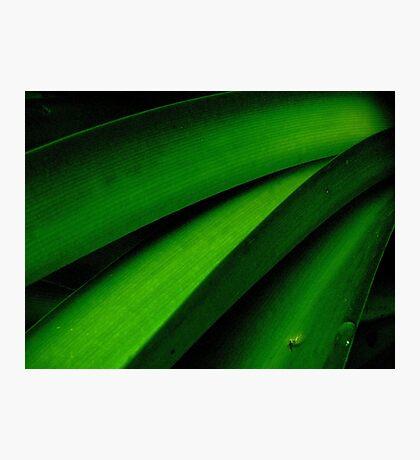 Greener than Green Photographic Print